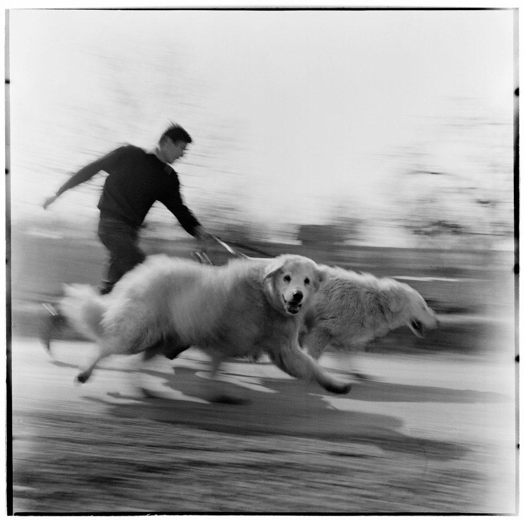 Vágta / Gallop (1968)