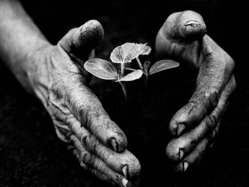 A kertész keze (Tarnaméra, 1978)