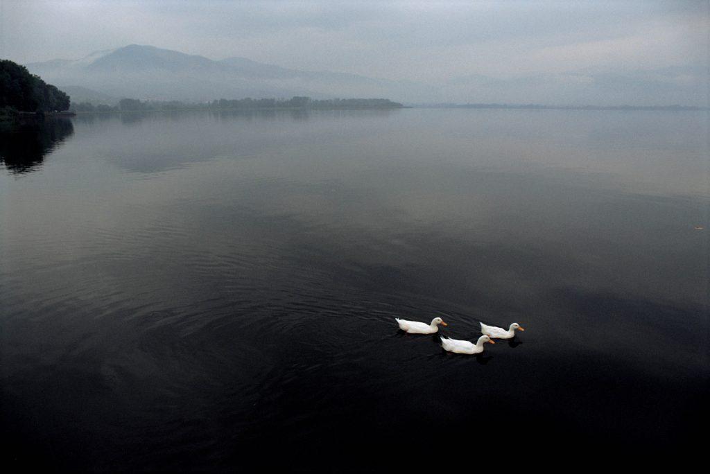 Harom kacsa (Limni Kastorias, Görögország 1991)