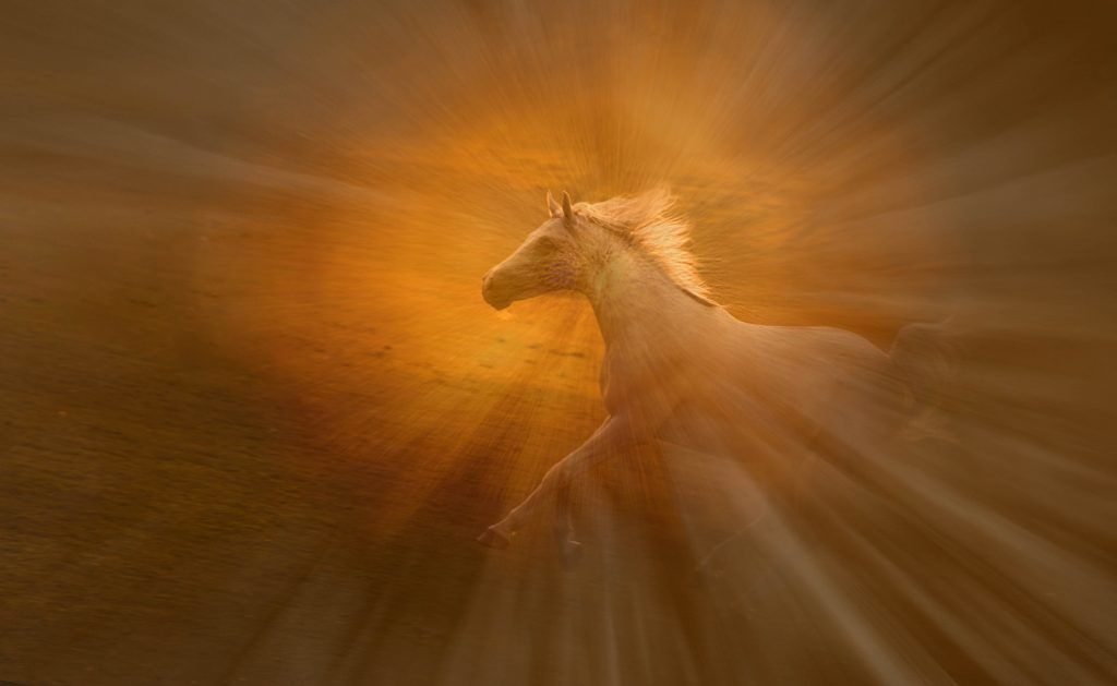 Aranyszőrű táltos paripa / Golden-haired tidal horse