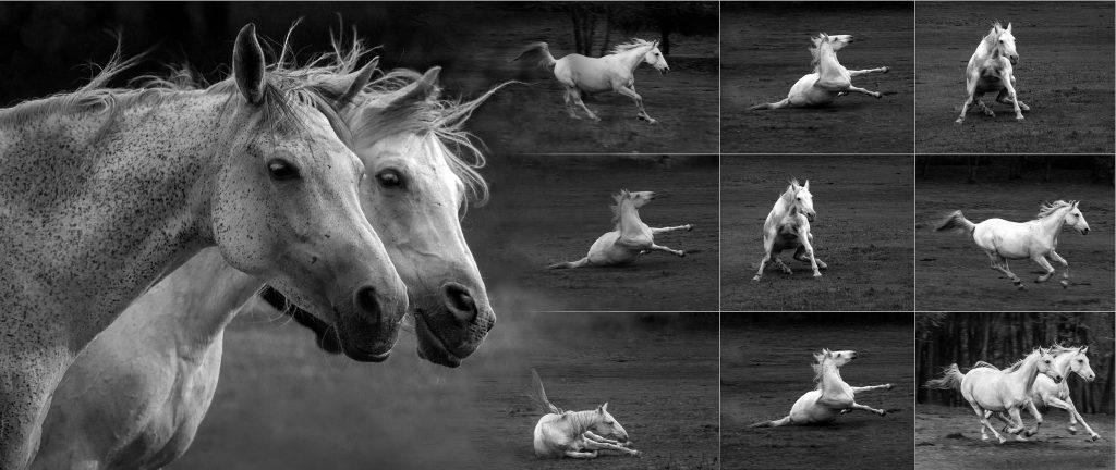 Két dühös ló története / The story of two angry horse